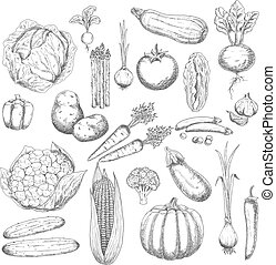 symbol, gemuese, frisch, ernte, herbst, skizze