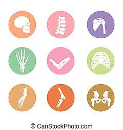 symbol of bones in the human body
