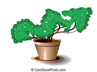 symbol of growth