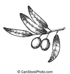 Symbol Of Peace Olive Branch Hand Drawn Vector