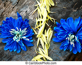 Symbol percent lined with petals on a wooden background