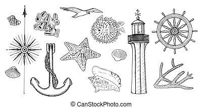 symbols., haditengerészeti, korall, fény, becsap, épület, swellfish, állhatatos, tengeri, rózsa, tenger csillag, héj, vasmacska, tengeri csillag, vezetés, kormányzó, felteker, gördít