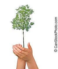 symbool, boompje, palmen, bescherming, natuur