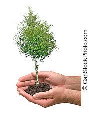 symbool, handen, boompje, potection, natuur