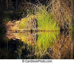 Symmetry on Snake River