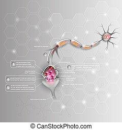 Synapse detailed anatomy, beautiful colorful illustration....