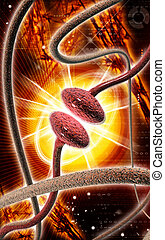 Synapse - Digital illustration of synapse in colour...