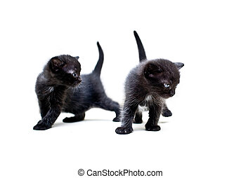 Synchronicity - Two black kittens explore the world around