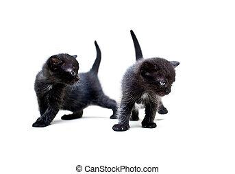Two black kittens explore the world around