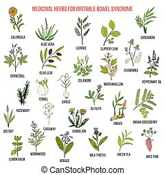 syndrome, intestin, herbes, irritable, ibs, mieux