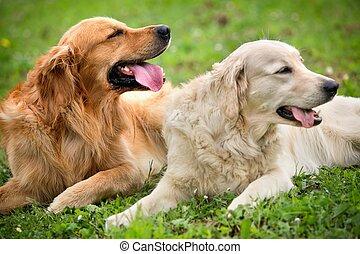 synhåll, av, två, hundkapplöpning, lögnaktig