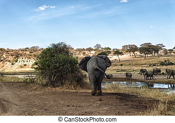synhåll, baksida, elefant