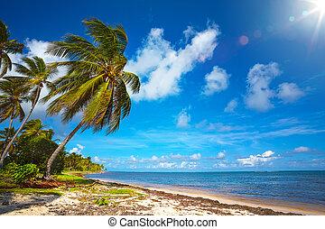 synhåll, konst, bakgrund, vacker, kust