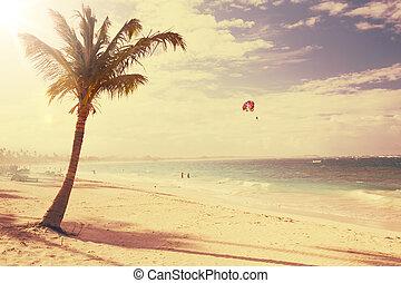synhåll, konst, bakgrund, vacker, kust, retro
