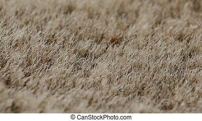 Synthetic fur background A fake fur material backdrop in...