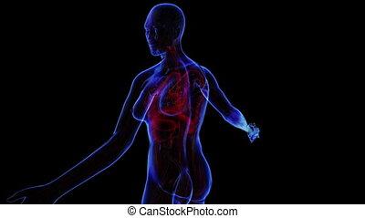 système respiratoire, femme