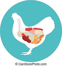 system., galinha, vetorial, anatomy., digestivo