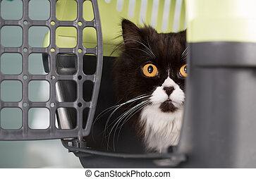 szállítmányozó, macska
