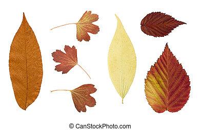 száraz, ősz kilépő, elszigetelt, white, háttér