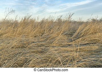 száraz, fű, és, gyomlálás, háttér