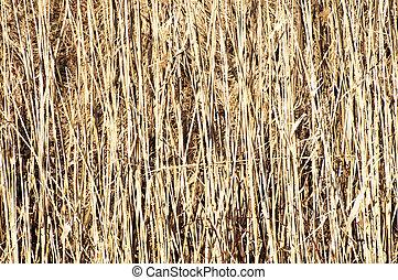száraz, fű, széna, háttér