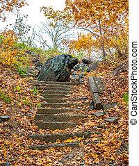 száraz, hintett, öreg, elhagyatott, lépcsőház, zöld, liget, ősz, bukott
