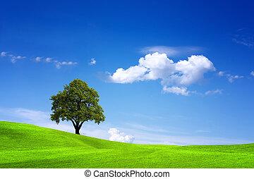 szépség, alatt, természet