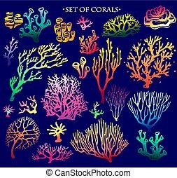 szín, állhatatos, víz alatti, alapismeretek, zátony, korall