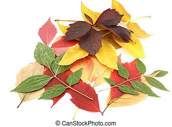 szín, ősz kilépő, ágacskák