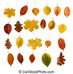 színes, ősz kilépő