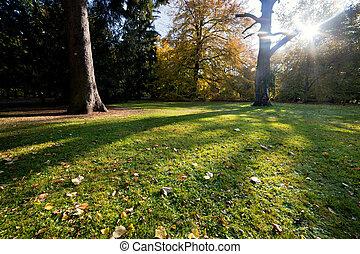 színes, bukás, ősz, liget
