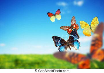 színes, buttefly, eredet, mező