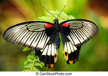 színes, butterfly.