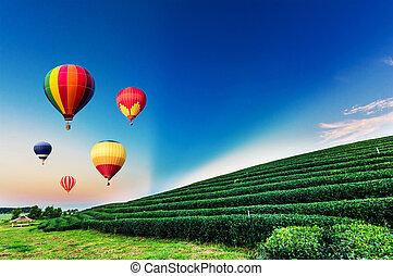 színes, forró lég, léggömb, slicc over, tea gyarmat, táj, -ban, sunset.