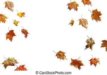 színes, keret, elszigetelt, ősz, fehér, határ, zöld