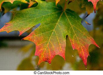színes, levél növényen