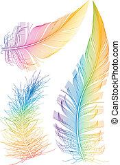 színes, vektor, tollazat