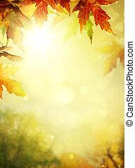 színes, zöld, liget, backgrounds;, lombozat, ősz