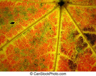 színpompás, ősz lap