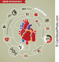 szív betegség, támad, infographic, emberi, egészség