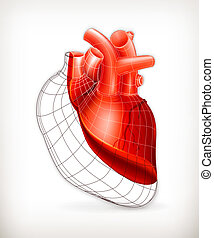 szív, szerkezet, vektor