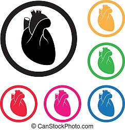 szív, vektor, cardio, emberi, ikon