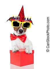 születésnap, kutya