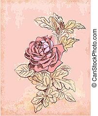 szüret, piros rózsa