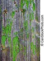 szürke, festett, idős, erdő, zöld
