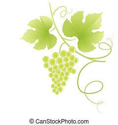 szőlő, vine.