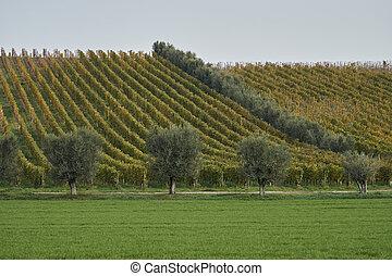 szőlőskert, alatt, ősz