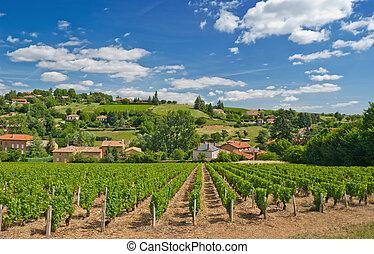 szőlőskert, alatt, beaujolais, vidék, franciaország