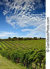 szőlőskert, ausztrál, táj