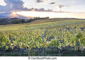 szőlőskert, -ban, napnyugta